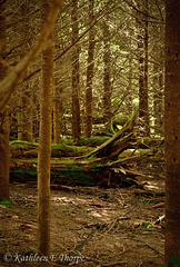 Mount Mitchell, Burnsville, North Carolina Woods