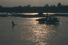 Water buffalo at dusk