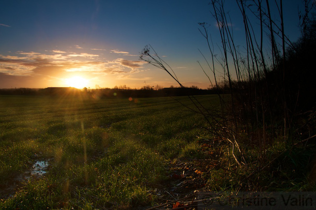 sunrise at the fields