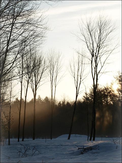 sun & mist