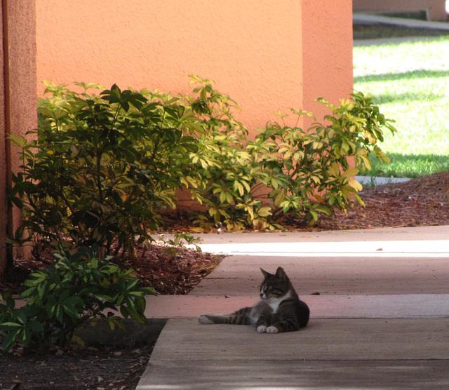 Complex Cat ... #1