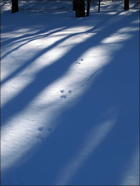 tracks & shadows