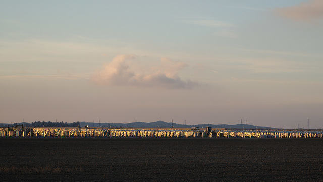 California Valley Solar Ranch (0934)