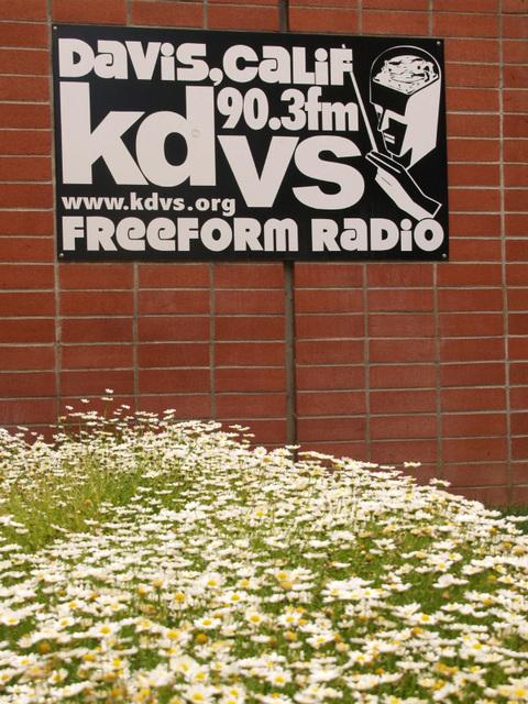 KDVS (p5280043)