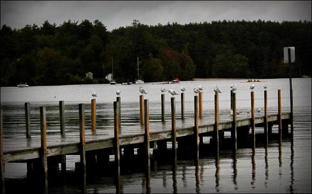 dock decor