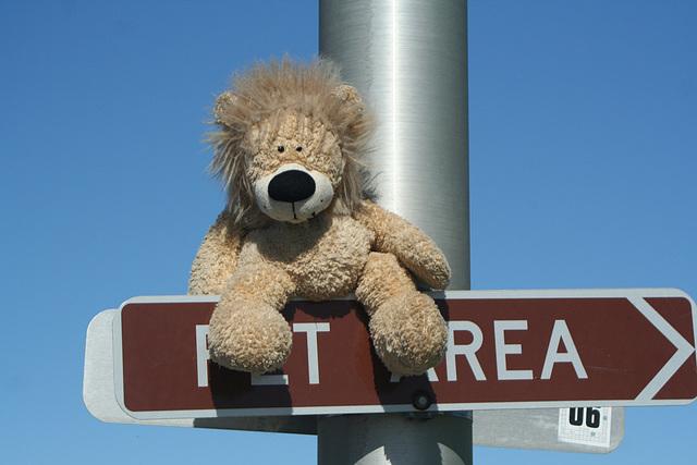 Lion's Trip