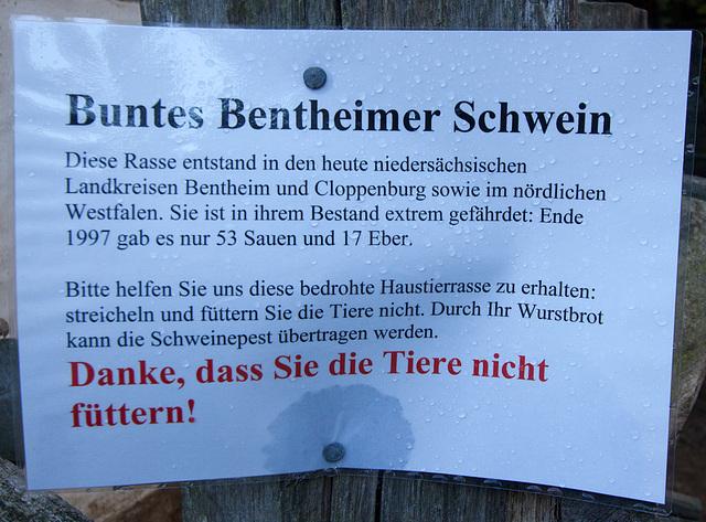 20121008 1472RWw Osnabrücker Hof, Schweineschuppen, Buntes Bentheimer Schwein