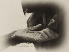 Hände... (Wilhelma)