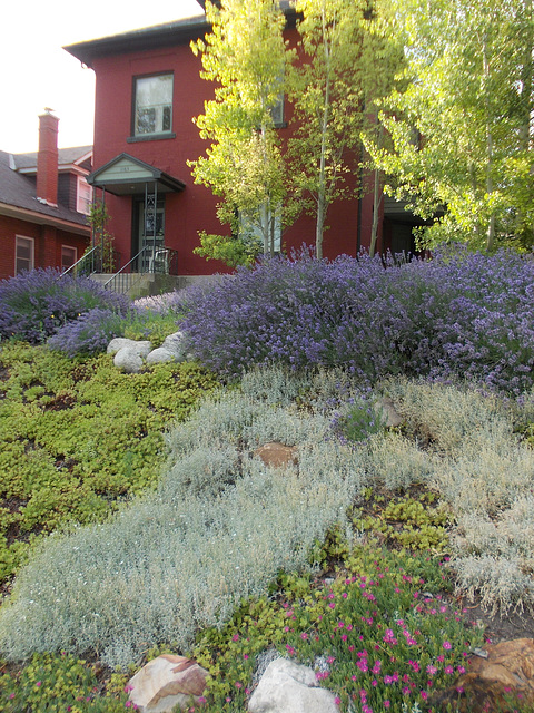 Beautifully xeriscaped yard