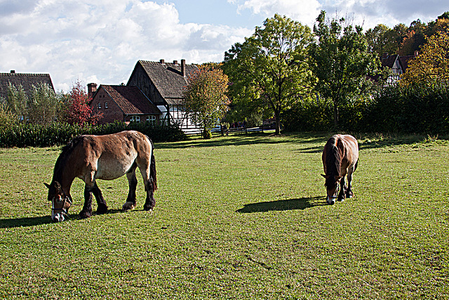 20121008 1537RAw Kaltblut-Pferde