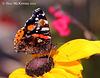 Botanic Gardens 038 copy 2