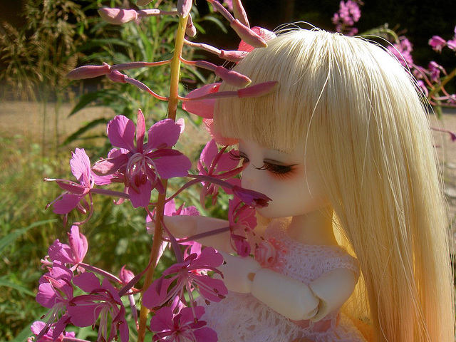 Lumi and fireweed