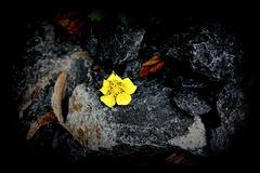 La fleur qui aimait une pierre
