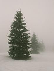 24 septembre, journée de l'arbre au Canada