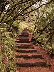 Muir Woods (p4217009)