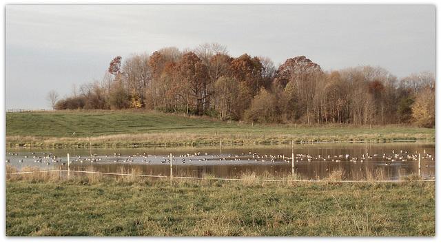 Ducky refuge