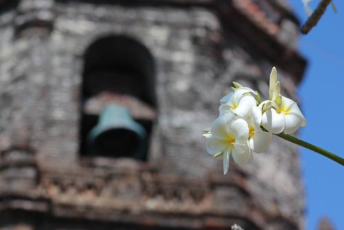 Frangipani and Bell