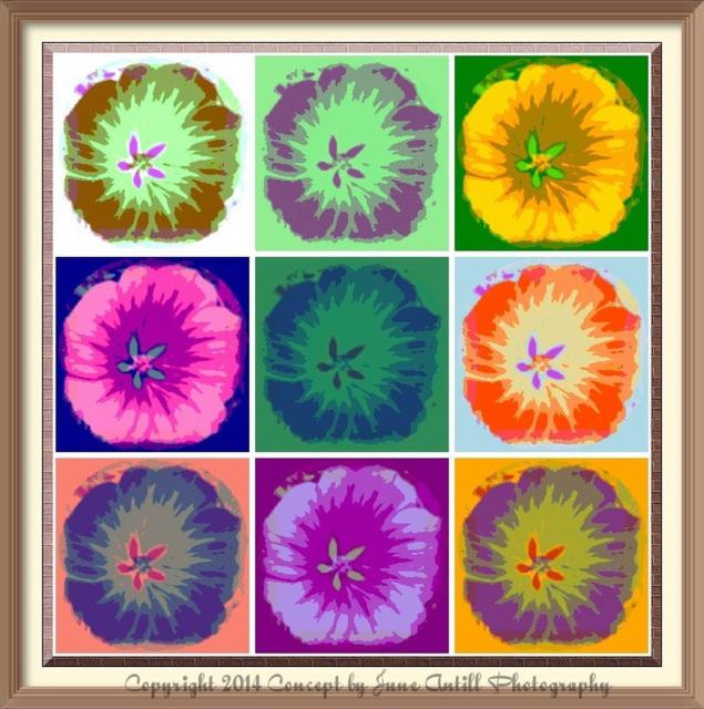 Woodland flowers, Warhol style