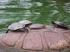 Turtles (p7315870)