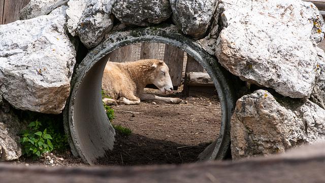 Esel und Schaf - 2014-07-31-_DSC4757