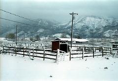 07-paddock_in_snow_ig_adj