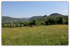 Paysage campagnard- Haute-Loire (3)