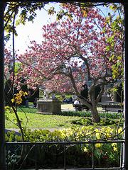 Magnolienblüte 2007 (Wilhelma)