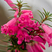 Grampians wildflowers