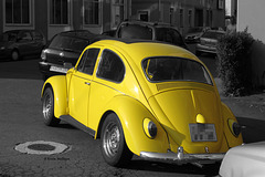 Flotter Käfer