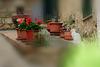 Blumentöpfe in Volterra (Toscana)