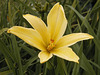 Lily (p7121782)