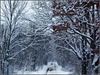 Winter trees *