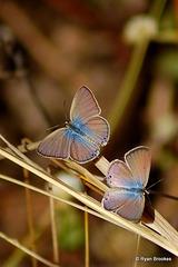 20070215-0001 Gram Blue