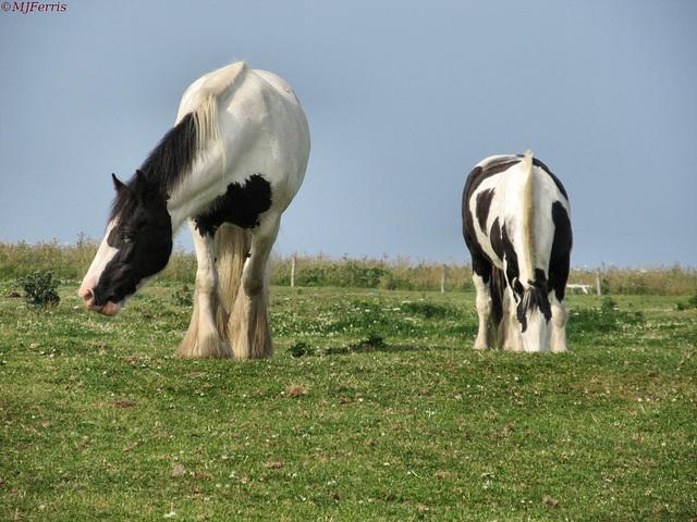 04 horses
