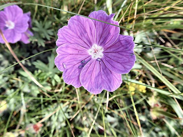 05 flower