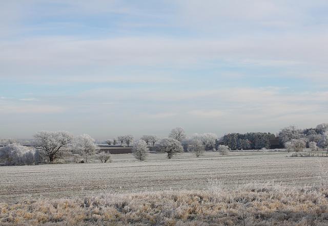 A frosty landscape