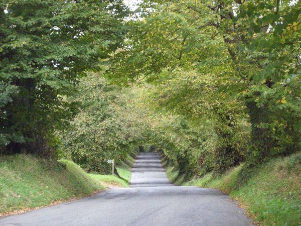 Gorgeous bushy tunnel