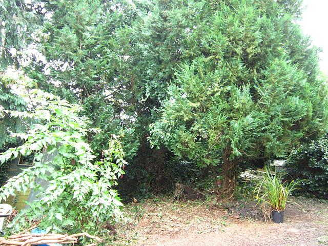 My driveway is very bushy
