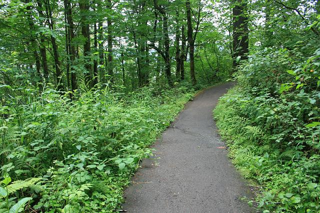 Trail to Bridalveil Falls