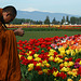 Zen and the Art of Tulip Photography