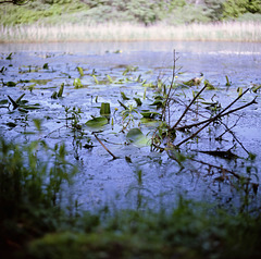 pond mood