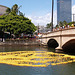 Rubber Duckie Race (p3299660)
