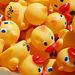 Rubber Duckies (p3299617)