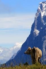 Pose devant l'Eiger
