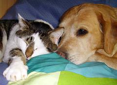 S'entendre comme chien et chat !