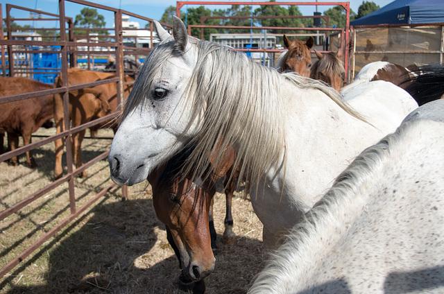 Stony Creek Rodeo 2014