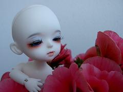 A bald vampire