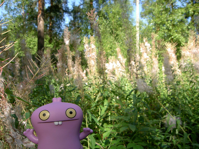 Babo and fireweed fluff