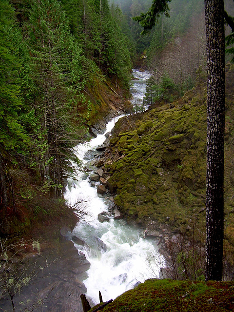 Nooksack River North Fork