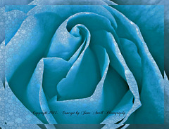 Blue rose is....